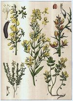 Rostliny  lucni kvety  travy