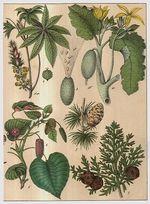 Rostliny lucni kvety travy  Rucne kolorovana litografie kolem roku 1850