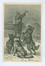 Krmeni psu