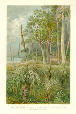 Eukalyptuswald und Grasbaume in Neuholland