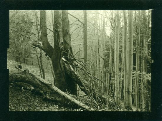 Mionsi  originalni fotografie - Helbich Petr | antikvariat - detail knihy